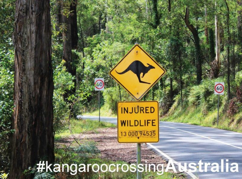 GreetingCards_Melbourne_Kangaroo_MADproducts_A6 SizeFront